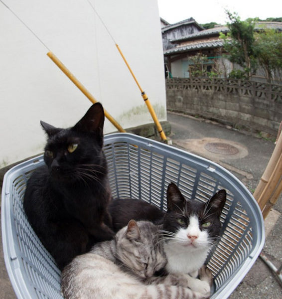 A ilha dos gatos no Japão (31)
