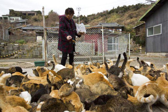 A ilha dos gatos no Japão (32)