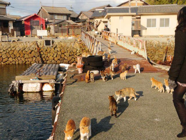 A ilha dos gatos no Japão (33)