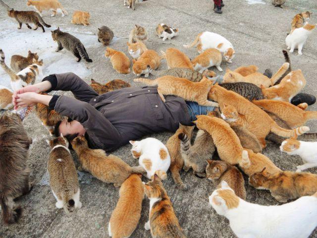 A ilha dos gatos no Japão (34)