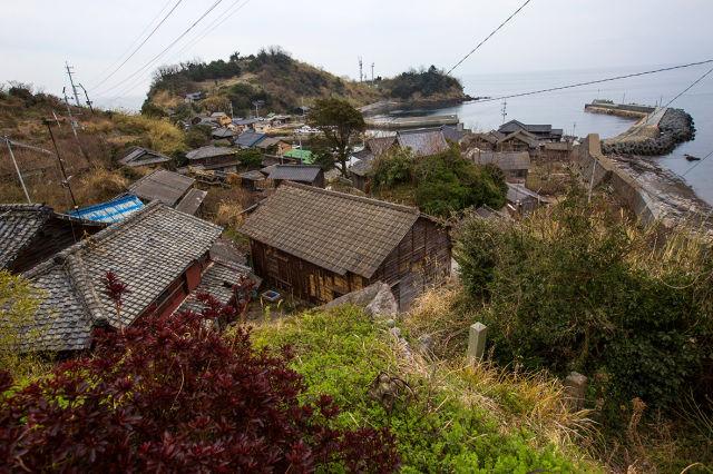 A ilha dos gatos no Japão (35)
