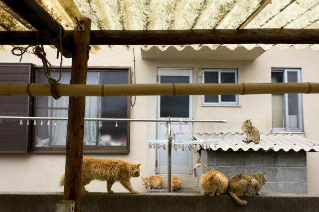 Cats sit on a wall on Aoshima Island in the Ehime prefecture in southern Japan