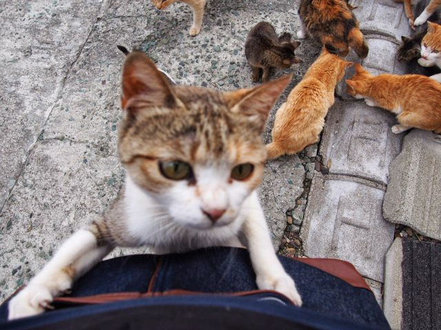 A ilha dos gatos no Japão (38)