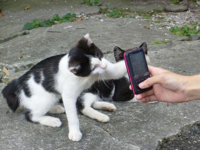 A ilha dos gatos no Japão (39)