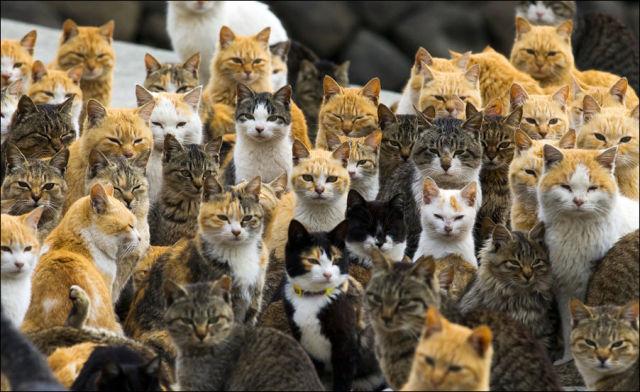 A ilha dos gatos no Japão (4)