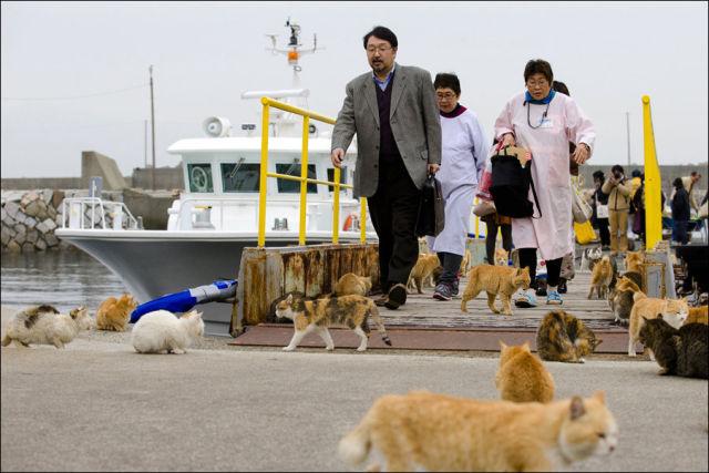 A ilha dos gatos no Japão (6)