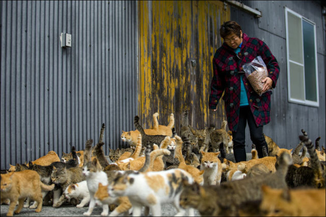 A ilha dos gatos no Japão (7)