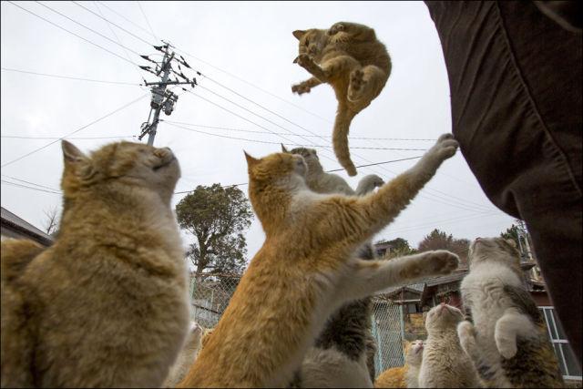 A ilha dos gatos no Japão (8)
