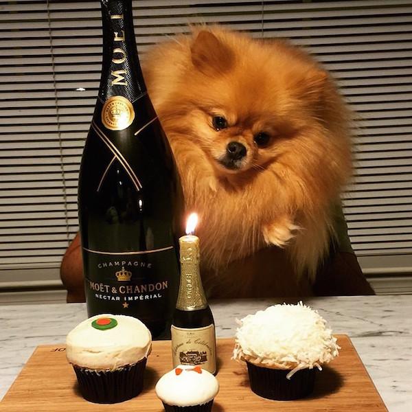 A-vida-de-ostentação-dos-cachorros-ricos-no-Instagram (1)