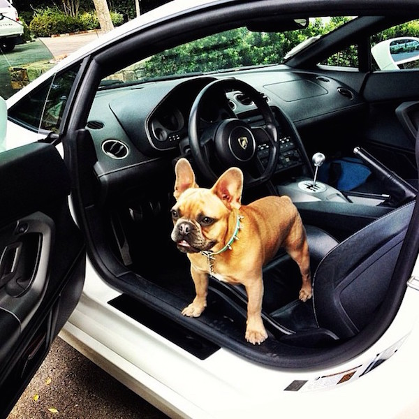 A-vida-de-ostentação-dos-cachorros-ricos-no-Instagram (12)