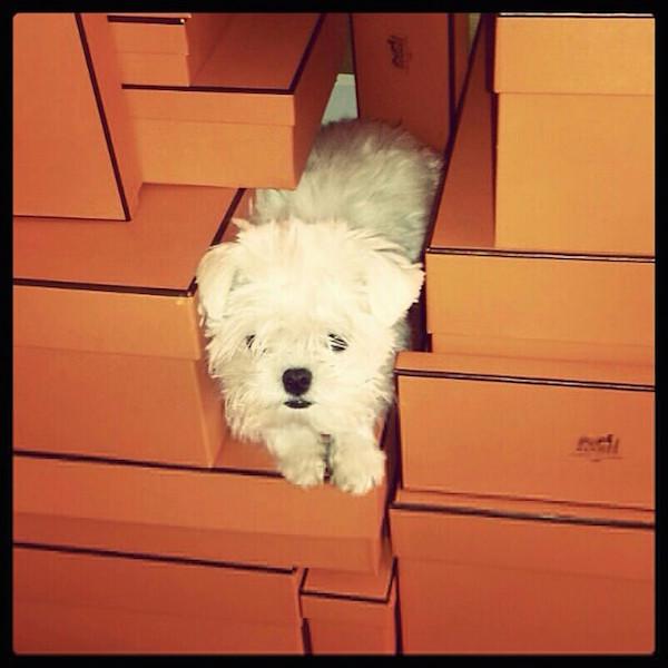 A-vida-de-ostentação-dos-cachorros-ricos-no-Instagram (14)