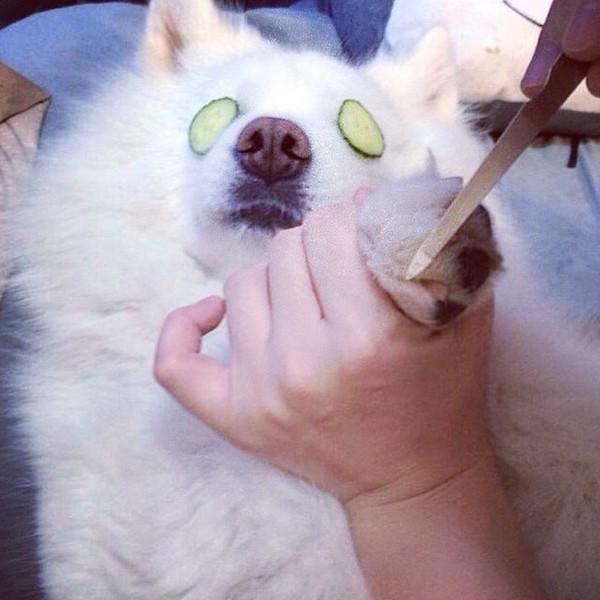 A-vida-de-ostentação-dos-cachorros-ricos-no-Instagram (15)
