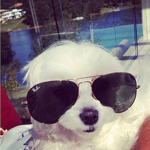 A-vida-de-ostentação-dos-cachorros-ricos-no-Instagram (17)