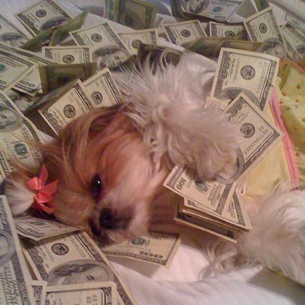 A vida de ostentação dos cachorros ricos no Instagram