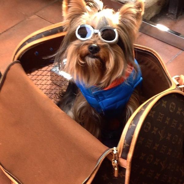 A-vida-de-ostentação-dos-cachorros-ricos-no-Instagram (2)