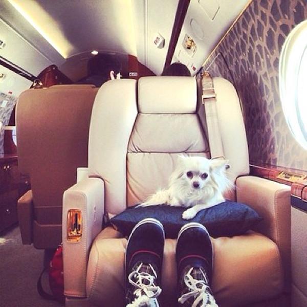 A-vida-de-ostentação-dos-cachorros-ricos-no-Instagram (20)