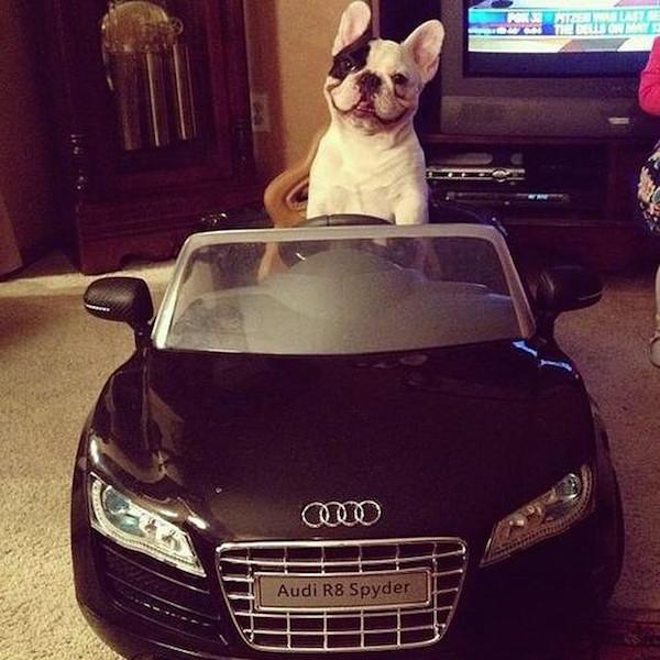 A-vida-de-ostentação-dos-cachorros-ricos-no-Instagram (22)