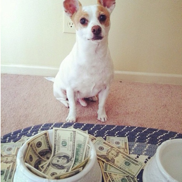 A-vida-de-ostentação-dos-cachorros-ricos-no-Instagram (5)