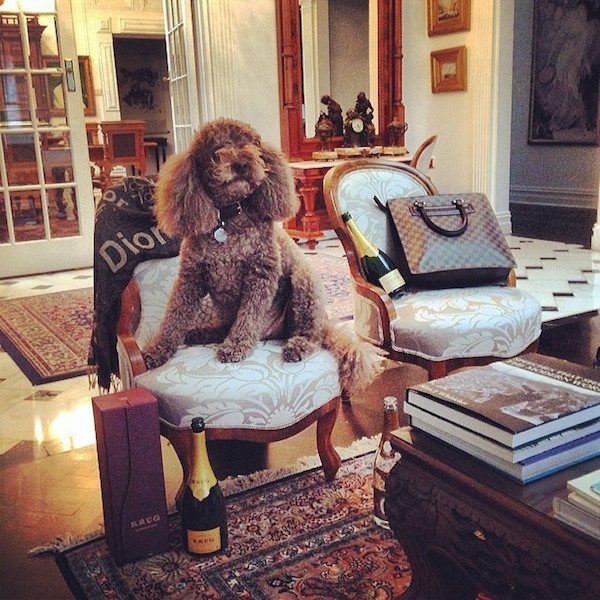 A-vida-de-ostentação-dos-cachorros-ricos-no-Instagram (6)