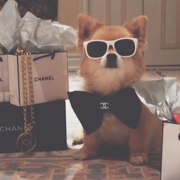 A-vida-de-ostentação-dos-cachorros-ricos-no-Instagram (7)
