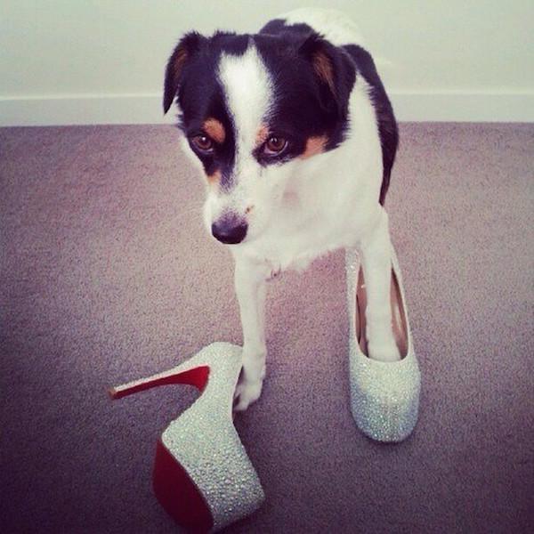 A-vida-de-ostentação-dos-cachorros-ricos-no-Instagram (8)