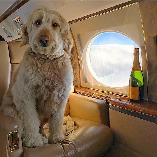 A-vida-de-ostentação-dos-cachorros-ricos-no-Instagram (9)