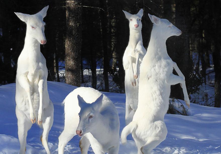 Animais albinos que não precisam de cores para serem legais (1)