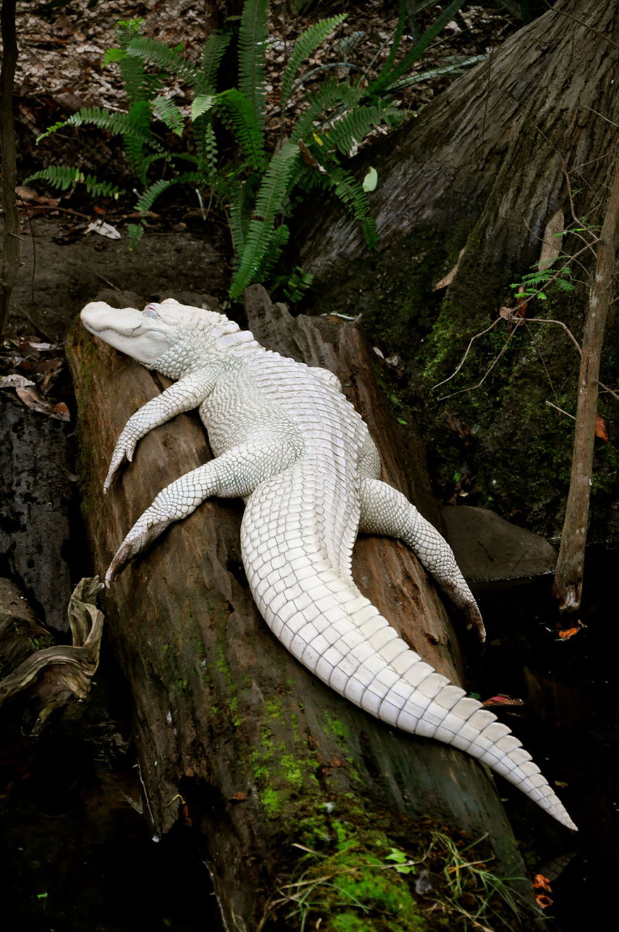 Animais albinos que não precisam de cores para serem legais (12)