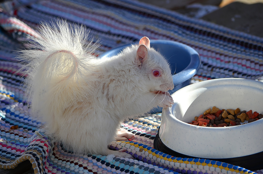 Animais albinos que não precisam de cores para serem legais (17)