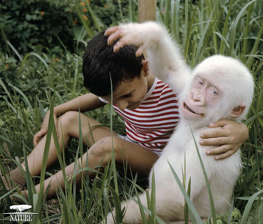 Animais albinos que não precisam de cores para serem legais (5)