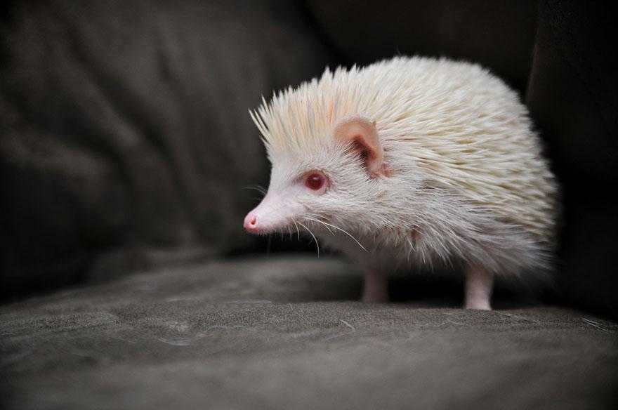 Animais albinos que não precisam de cores para serem legais (7)