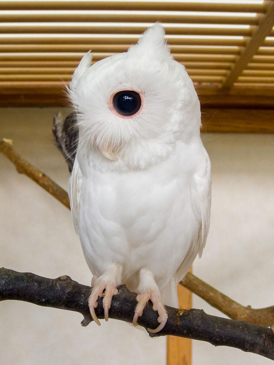 Animais albinos que não precisam de cores para serem legais (8)