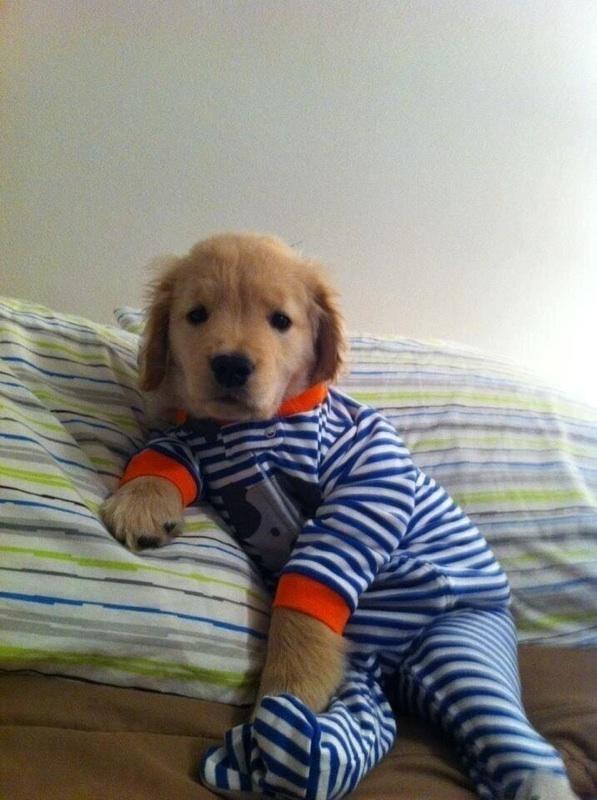 Animais de pijamas provam que podem ficar ainda mais fofos