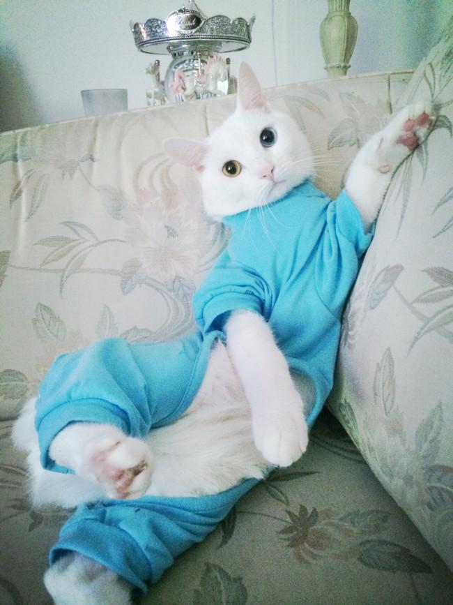 Animais_de_pijamas (16)