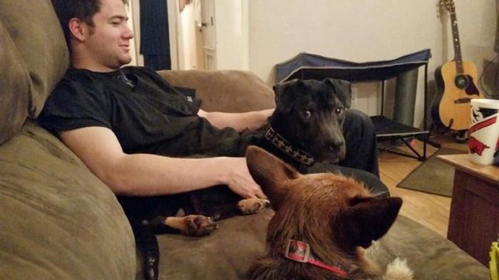 Cão abandonado é resgatado (13)