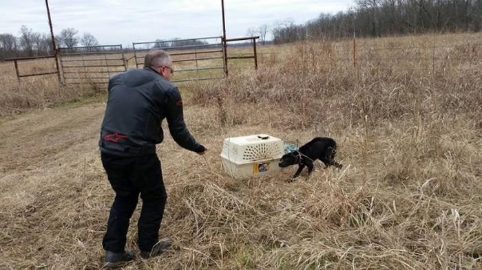 Cão abandonado é resgatado (3)