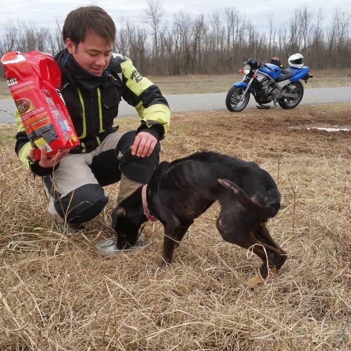 Cão abandonado é resgatado (4)