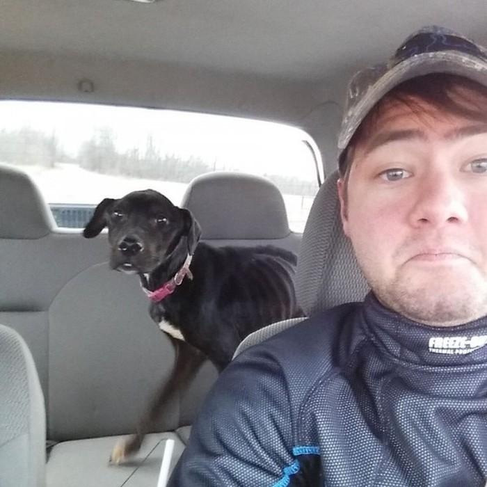Cão abandonado é resgatado (5)