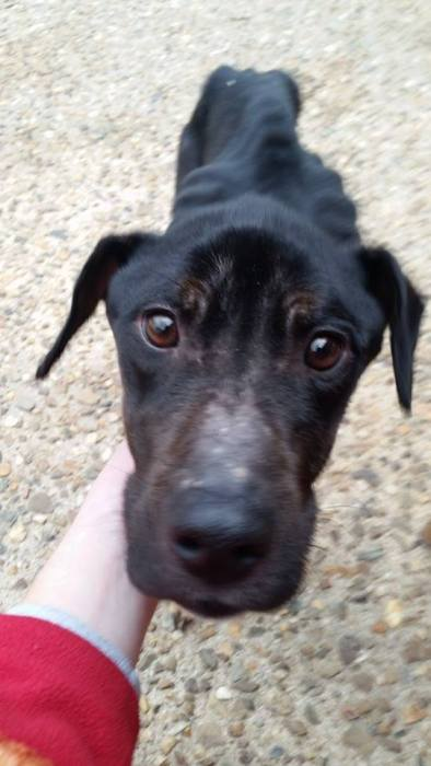 Cão abandonado é resgatado (9)