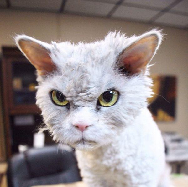 Conheça Albert, o gato mal humorado (1)