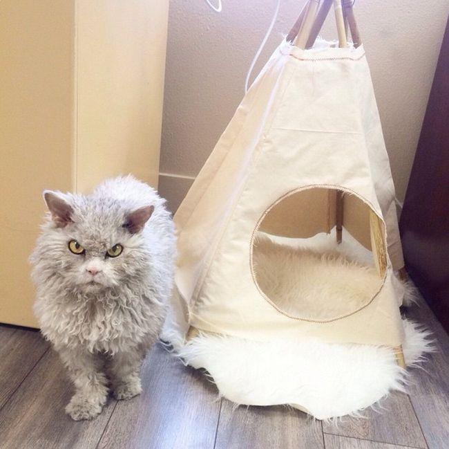 Conheça Albert, o gato mal humorado (10)