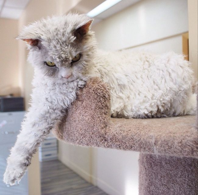 Conheça Albert, o gato mal humorado (11)