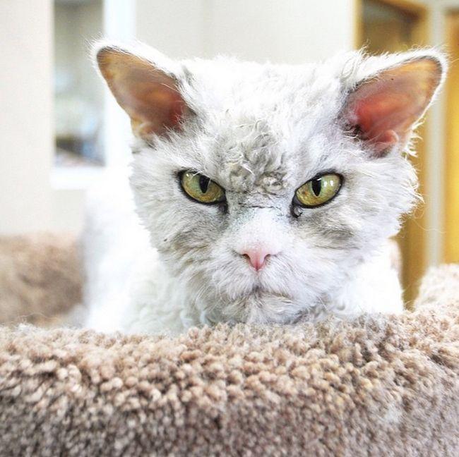Conheça Albert, o gato mal humorado (12)