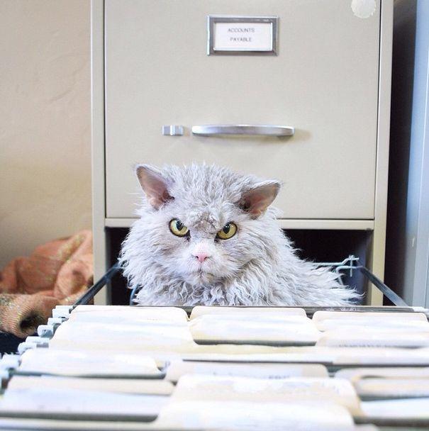 Conheça Albert, o gato mal humorado (15)