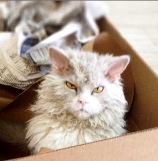 Conheça Albert, o gato mal humorado (16)