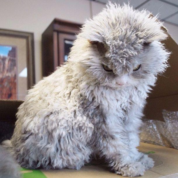 Conheça Albert, o gato mal humorado (17)