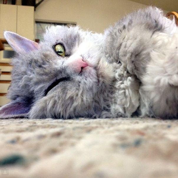 Conheça Albert, o gato mal humorado (18)