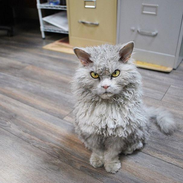 Conheça Albert, o gato mal humorado (19)