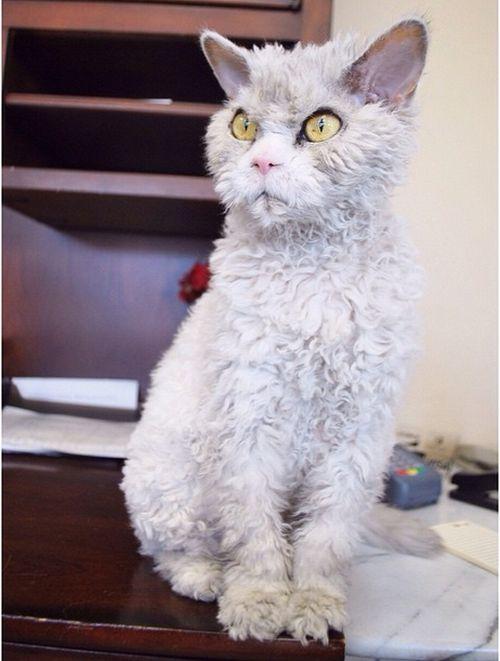 Conheça Albert, o gato mal humorado (2)