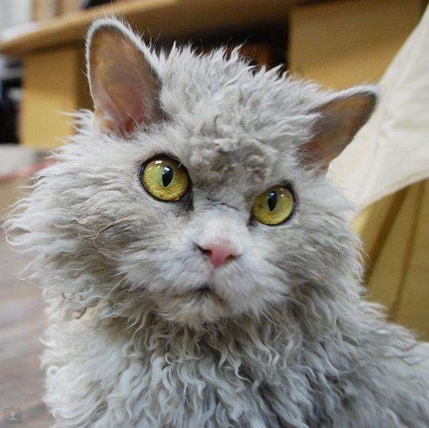 Conheça Albert, o gato mal humorado (20)